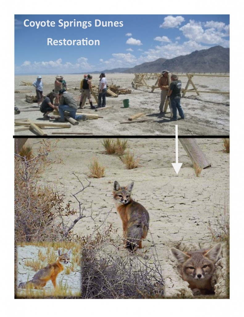 COYOTE DUNES PROJECT
