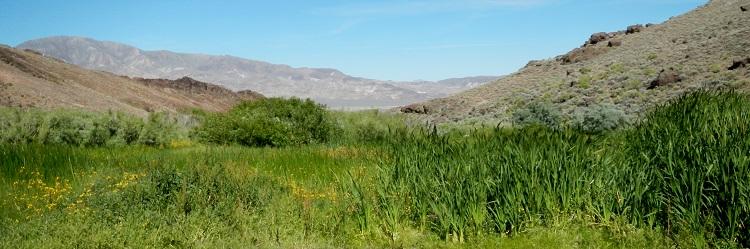 riparian meadow