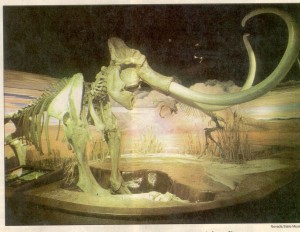 Mammoth_carson