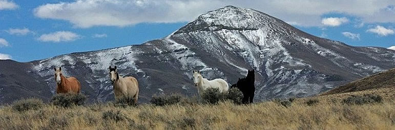 Wild Horses and Burros - Friends of Black Rock High Rock